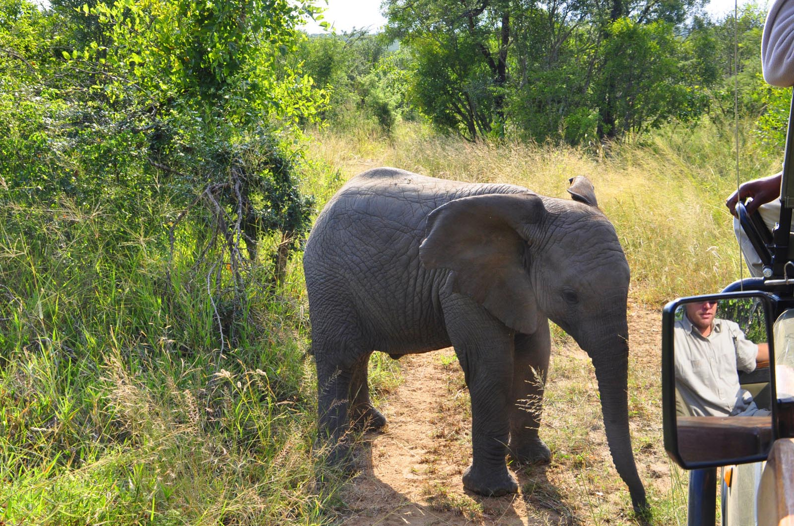 chikunto-lodge-zambia-in-style-safari-packages-lodges-luxury-tents-south-luangwa-location-game-elephant