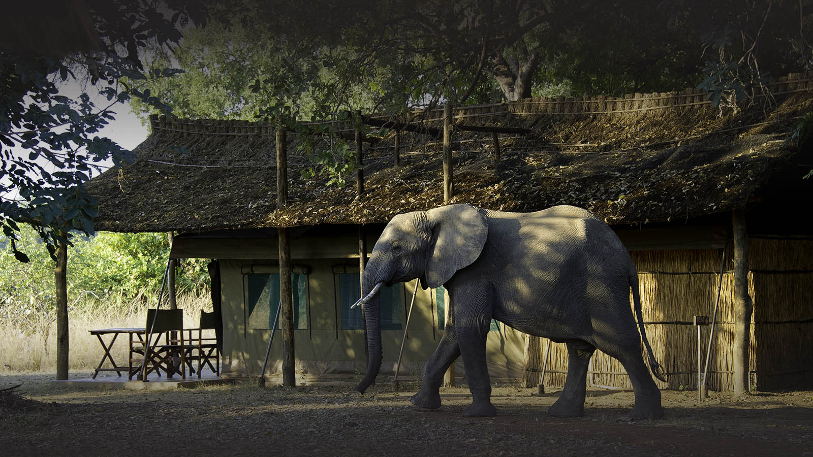 flatdogs-camp-zambia-in-style-tours-safari-packages-lodges-explore-south-luangwa-national-park-tent-elephant-luxury