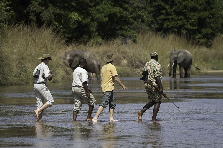kuyenda bush camp lodge-zambia-in-style-tours-safari-packages-lodges-explore-south-luangwa-national-park-walking