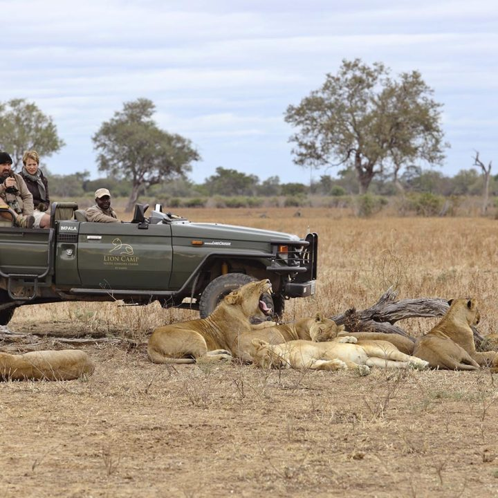 lion camp lodge zambia-in-style-safari-packages-tours-south-luangwa-national-park-lion-pride