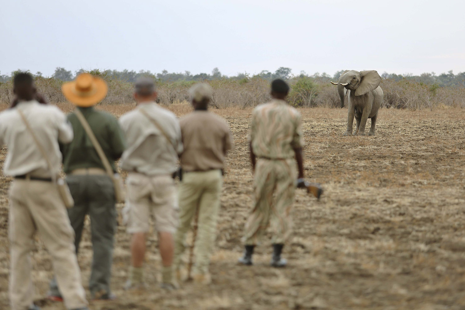 lion camp lodge-zambia-in-style-safari-packages-tours-south-luangwa-national-park-viewing-elephant-on-foot