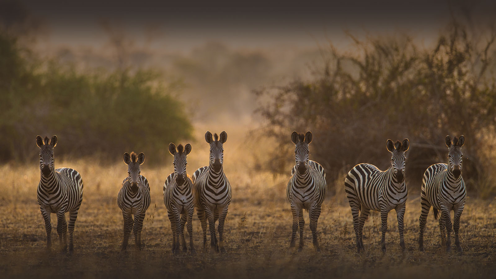 luambe-camp-lodge-zambia-in-style-tours-safari-packages-lodges-luambe-national-park-south-north-luangwa-zebra