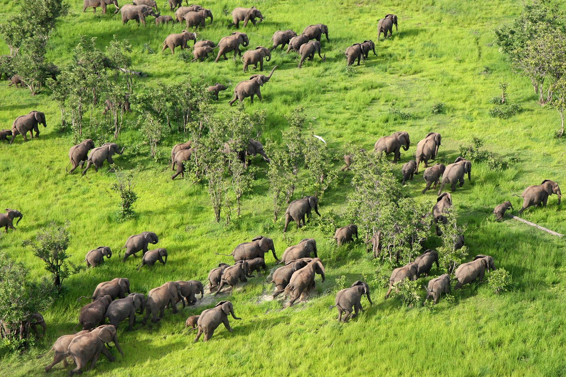 mfuwe-bush-camp-zambia-in-style-safari-packages-south-luangwa-national-park-mango-season-elephants