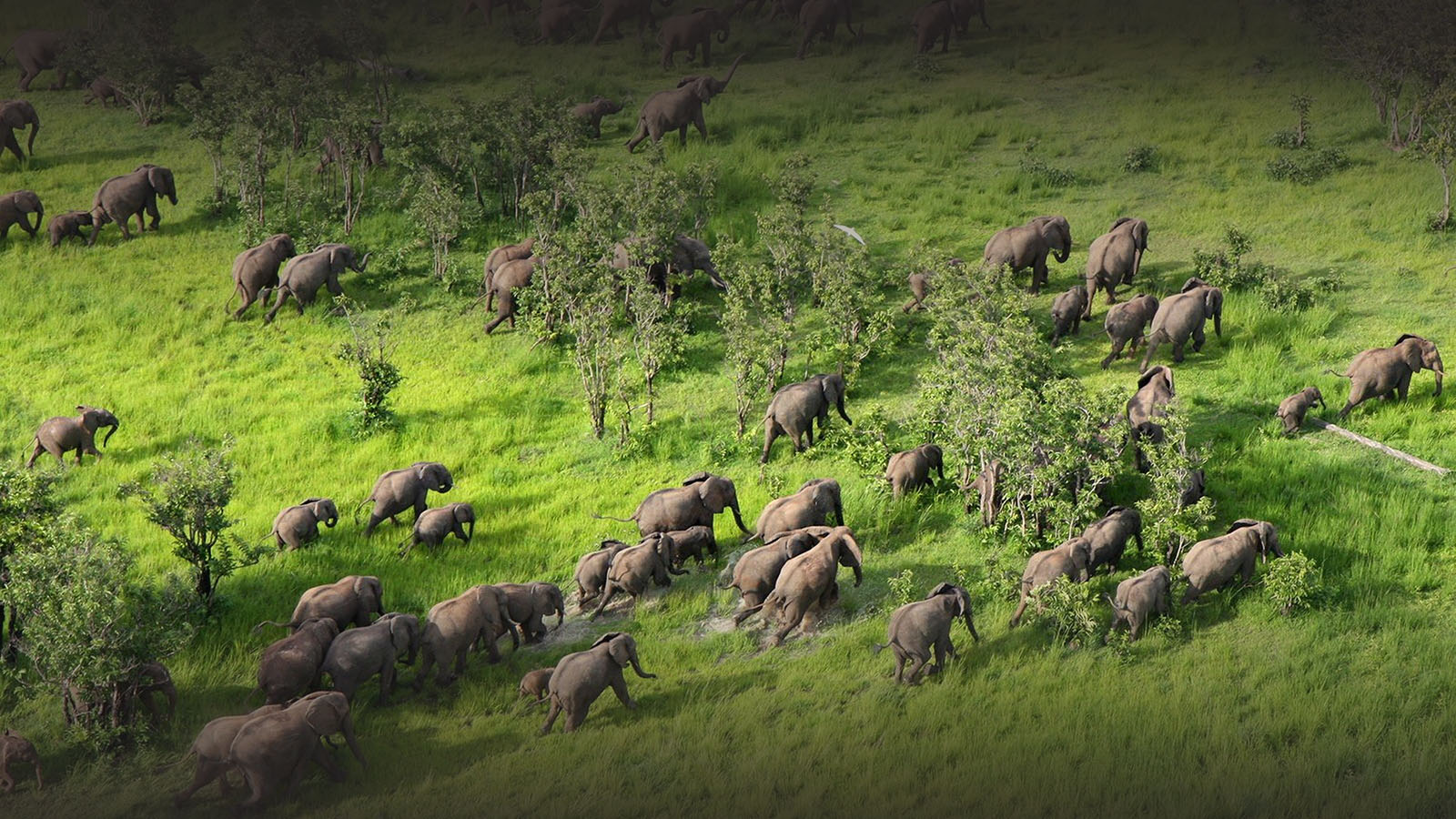 mfuwe-bush-camp-zambia-in-style-safari-packages-south-luangwa-national-park-tours-elephant-herd