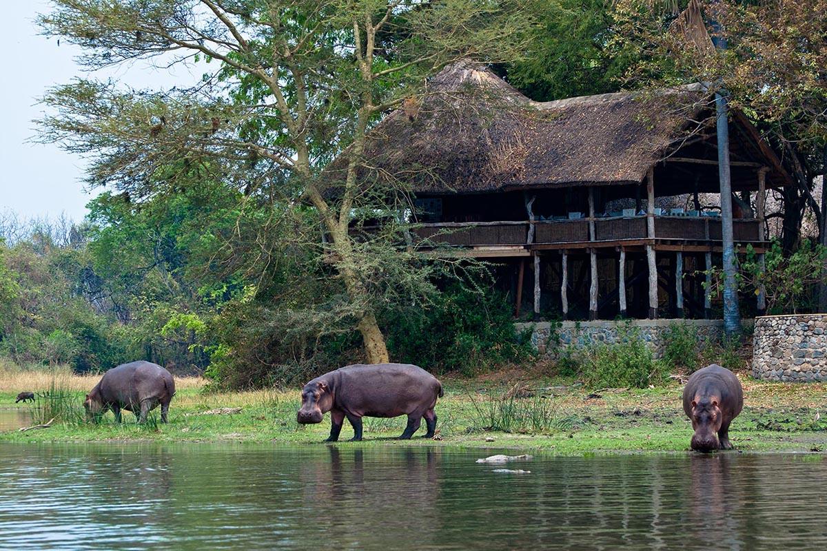 mfuwe-lodge-green-season-tours-malawi-south-luangwa-zambia-in-style-safari-packages-tours-mvuu-lodge-liwonde-national-park-lounge-deck-hippos