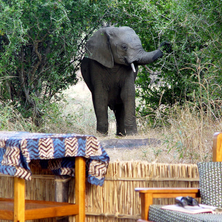 mwamba-bush-camp-lodge-zambia-in-style-safari-packages-tours-south-luangwa-national-park-elephant