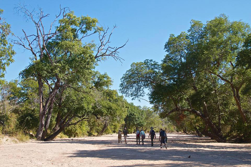 nkonzi-camp-lodge-zambia-in-style-safari-packages-lodges-exploring-south-luangwa-national-park-walking-to-camp
