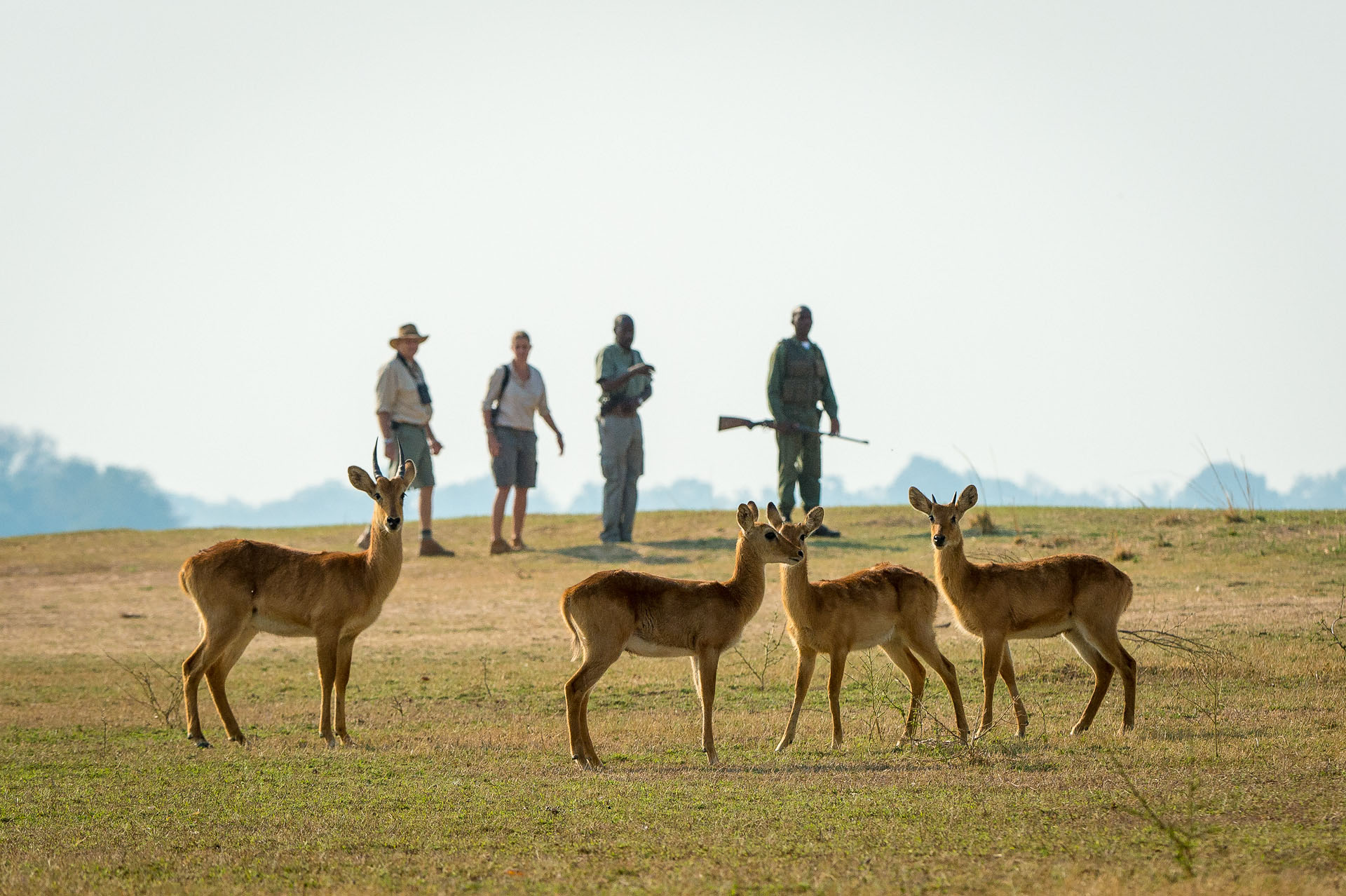 nkwali-zambia-in-style-safari-packages-south-luangwa-national-park-guide