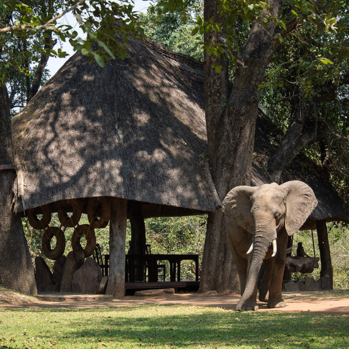 nkwali-zambia-in-style-safari-packages-south-luangwa-national-park-tours-elephant-walking