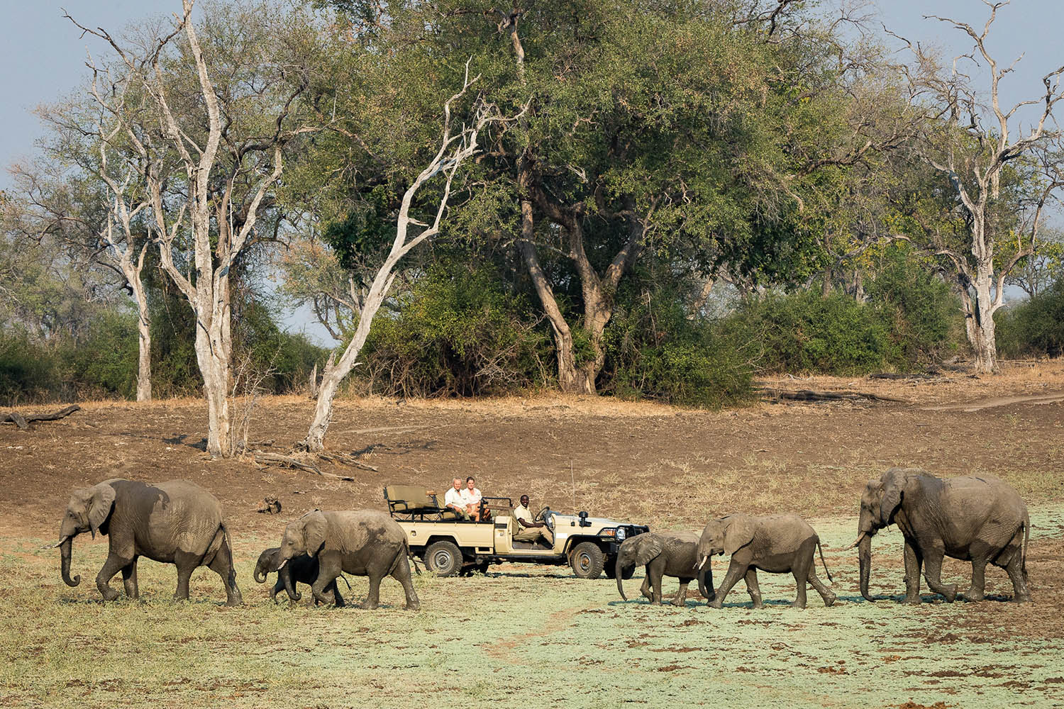 nkwali-zambia-in-style-safari-packages-south-luangwa-national-park-tours-game-drives