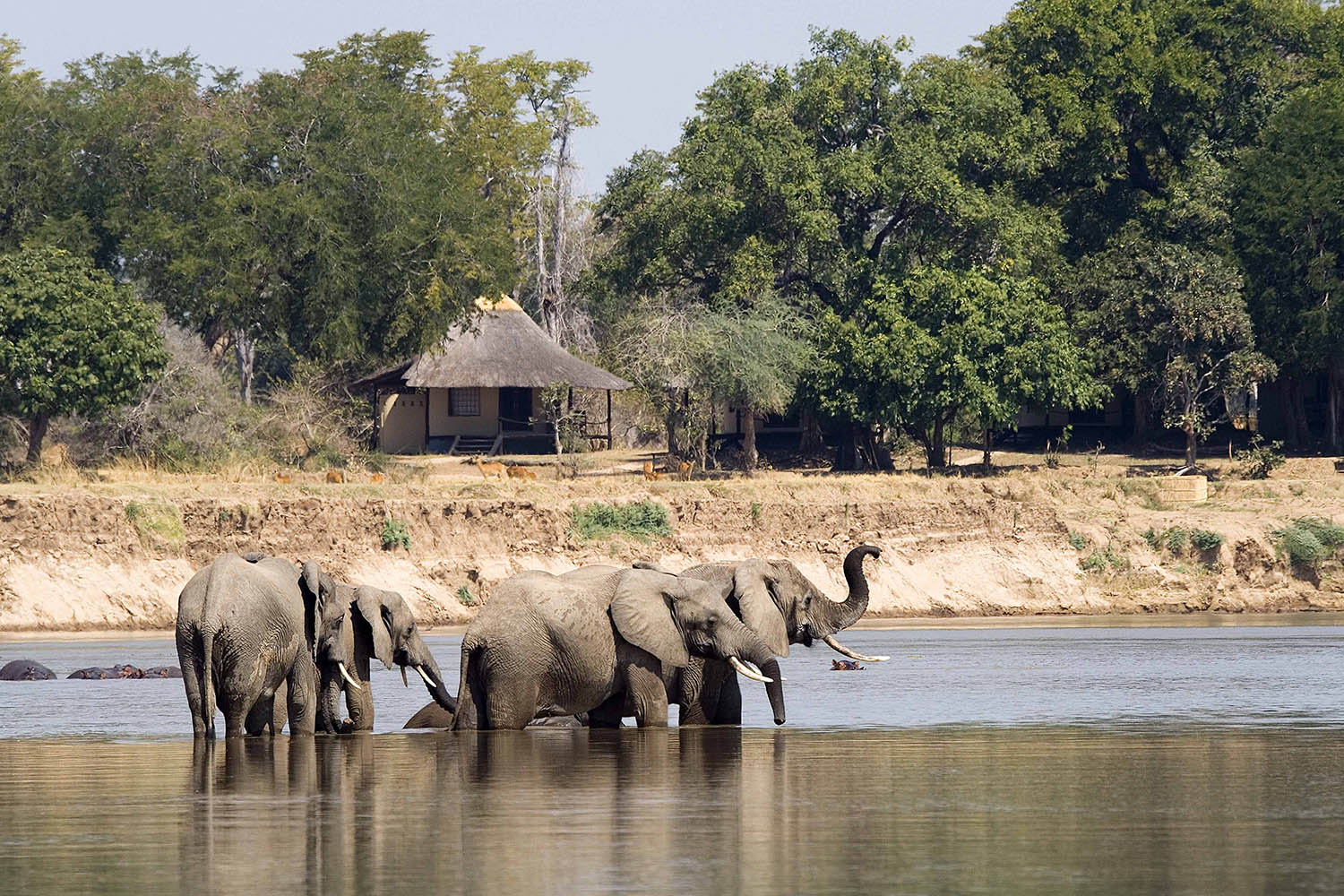 nsefu camp lodge-zambia-in-style-travel-safari-packages-lodges-south-luangwa-national-park-elephants-river