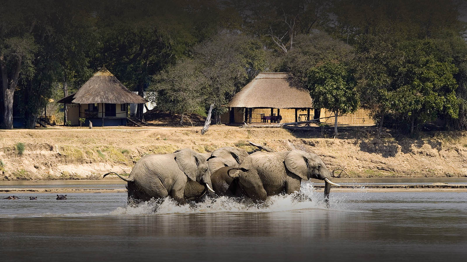 nsefu camp lodge-zambia-in-style-travel-safari-packages-lodges-south-luangwa-national-park-elephants-walking-river