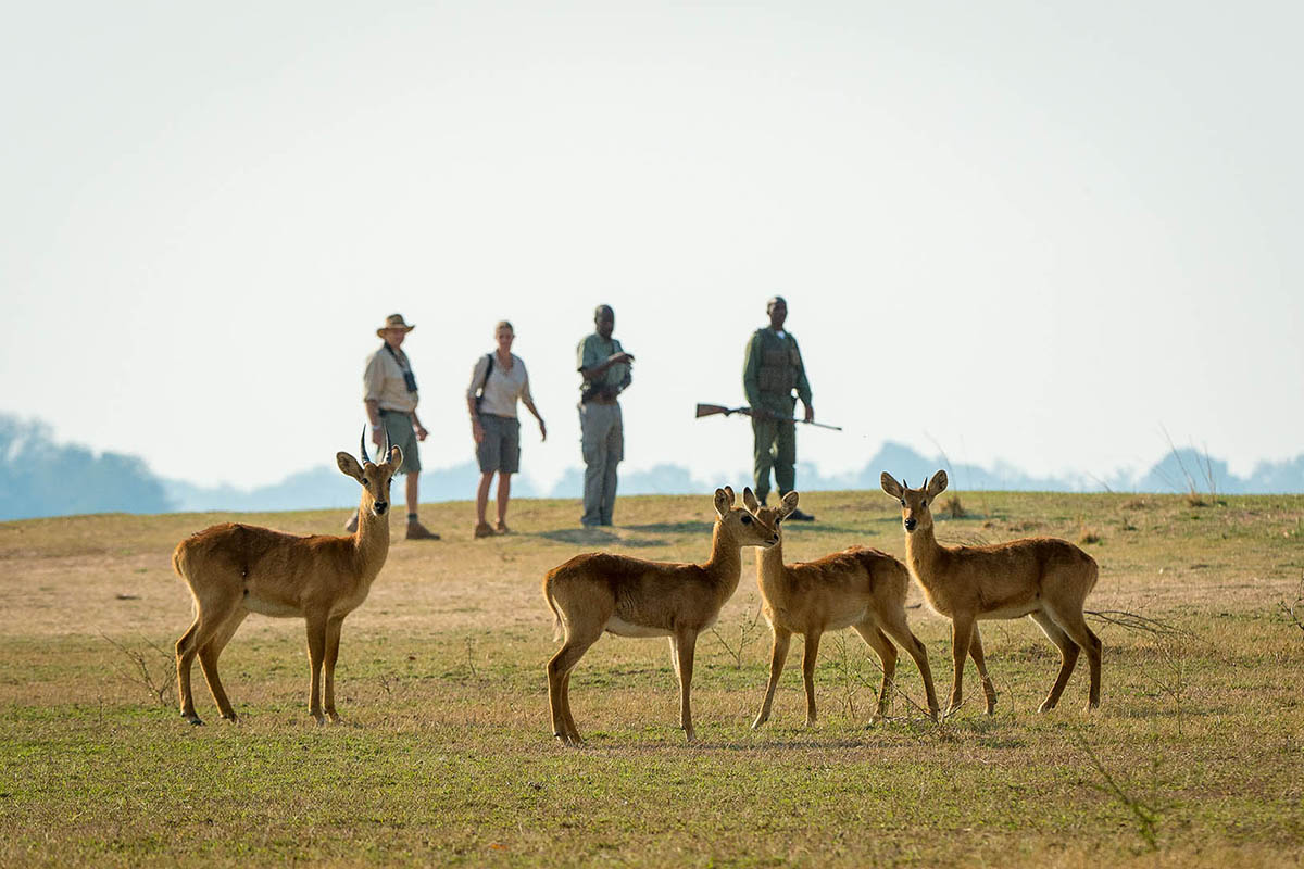 nsefu camp lodges-green-season-tours-zambia-in-style-safari-packages-nkwali-south-luangwa-game-walk-safari