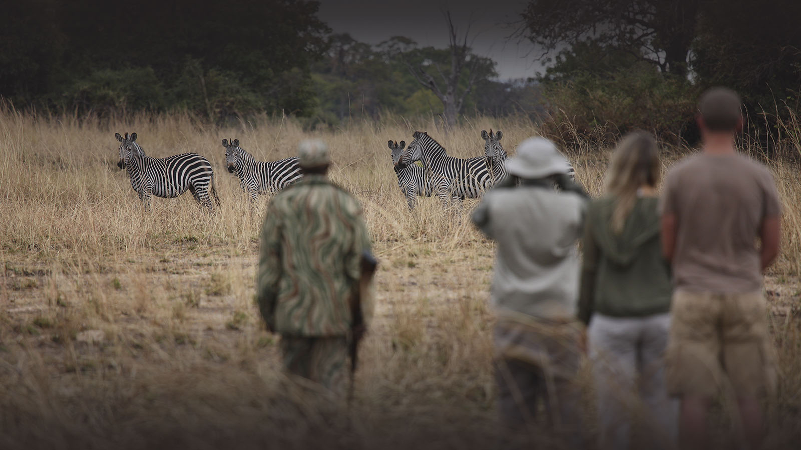 rps mobile walking safari lodge-zambia-in-style-tours-safari-packages-lodges-south-luangwa-national-park-africa-zebras