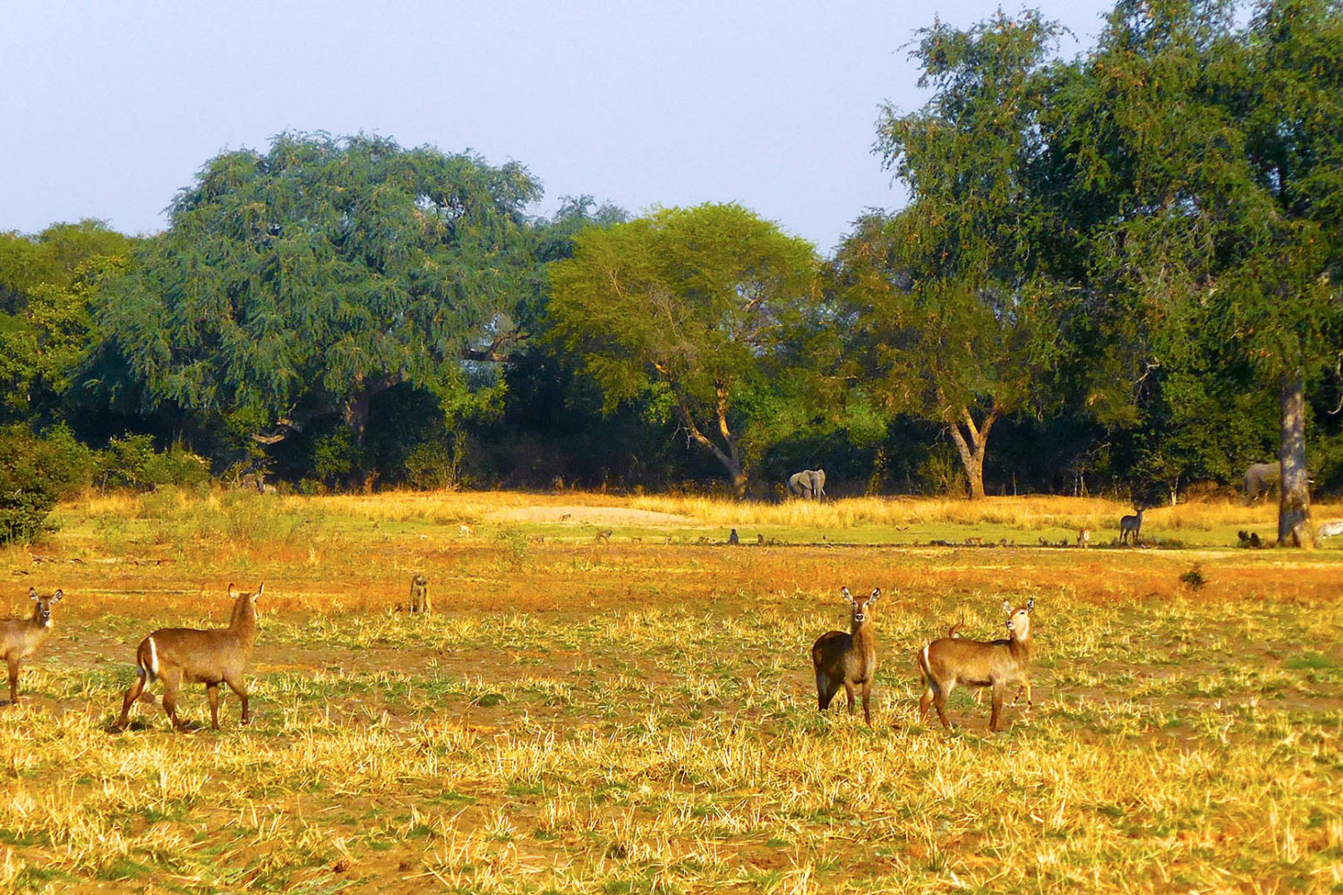 three rivers camp zambia-in-style-travel-safari-packages-lodges-south-luangwa-wildlife-elephants-landscape