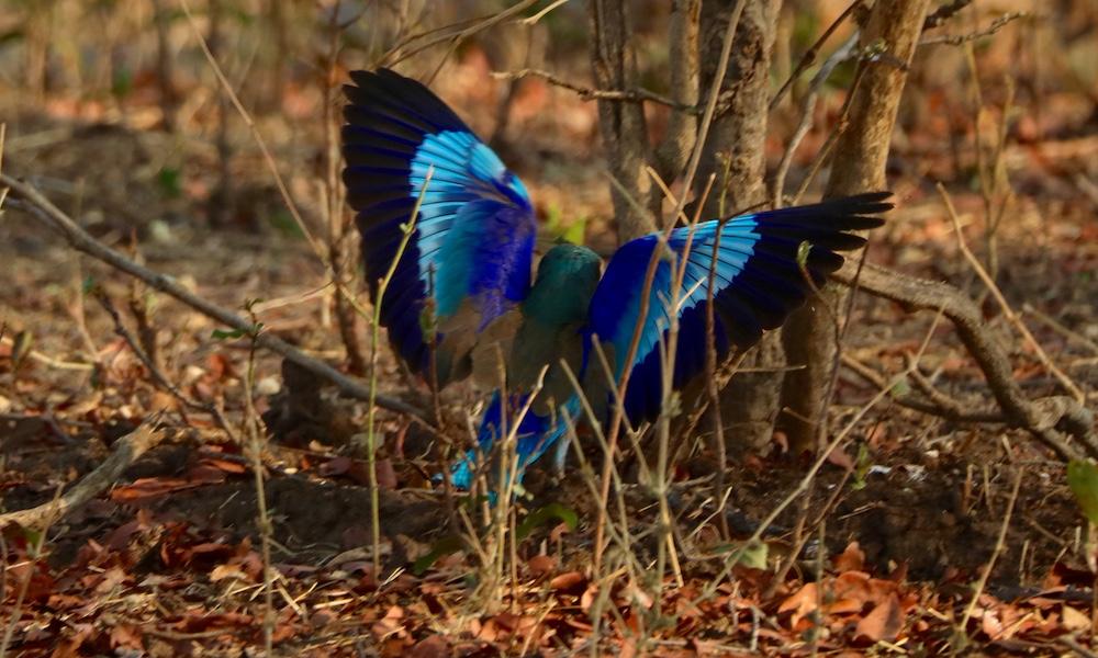bird during green season