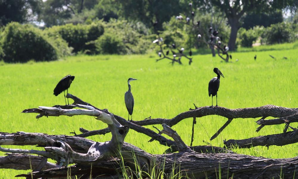 bird in green season