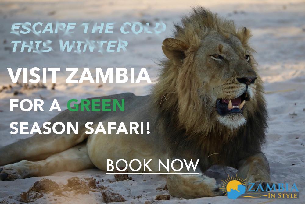 Go on a green season safari