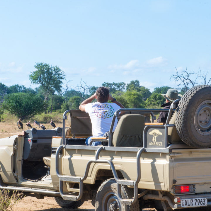 game drive with anabezi
