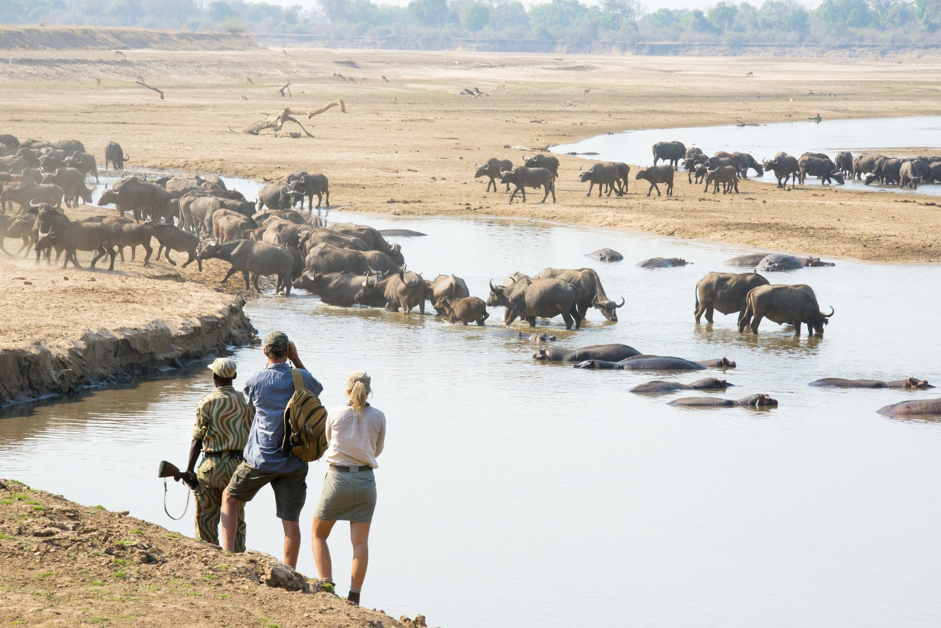 shenton safaris walking safaris