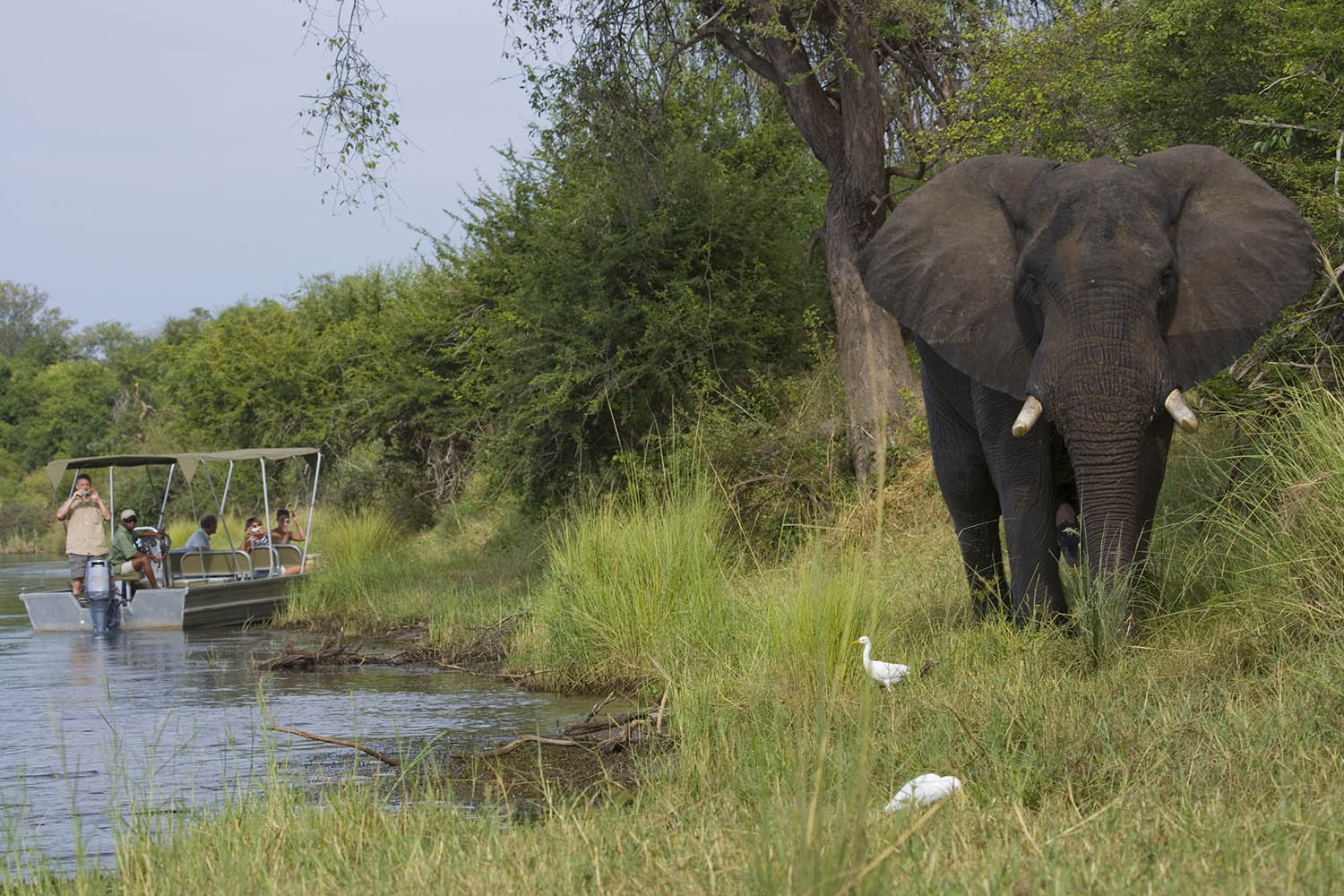 baines river camp zambia-in-style-safari-packages-lodges-lower-zambezi-activities-elephants-riverbank