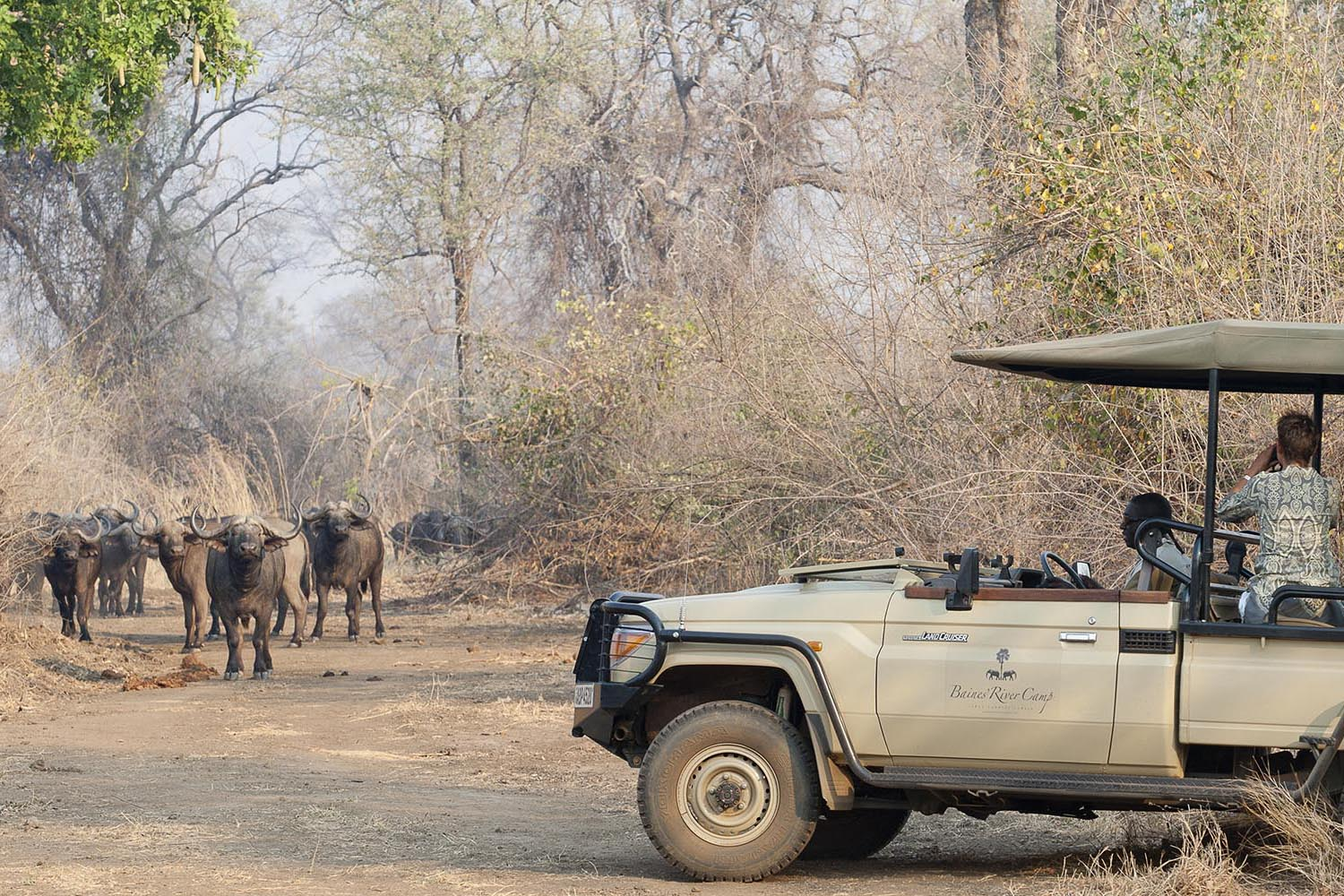baines river camp zambia-in-style-safari-packages-lodges-lower-zambezi-activities-game-drive