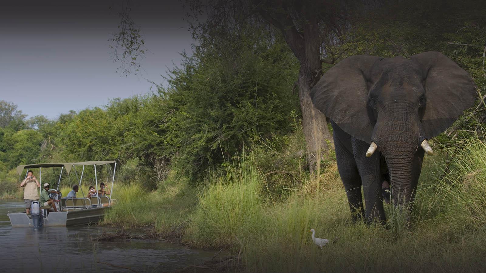 baines river camp zambia-in-style-safari-packages-lodges-lower-zambezi-remote-african-safari-experience-boat-safari-elephants
