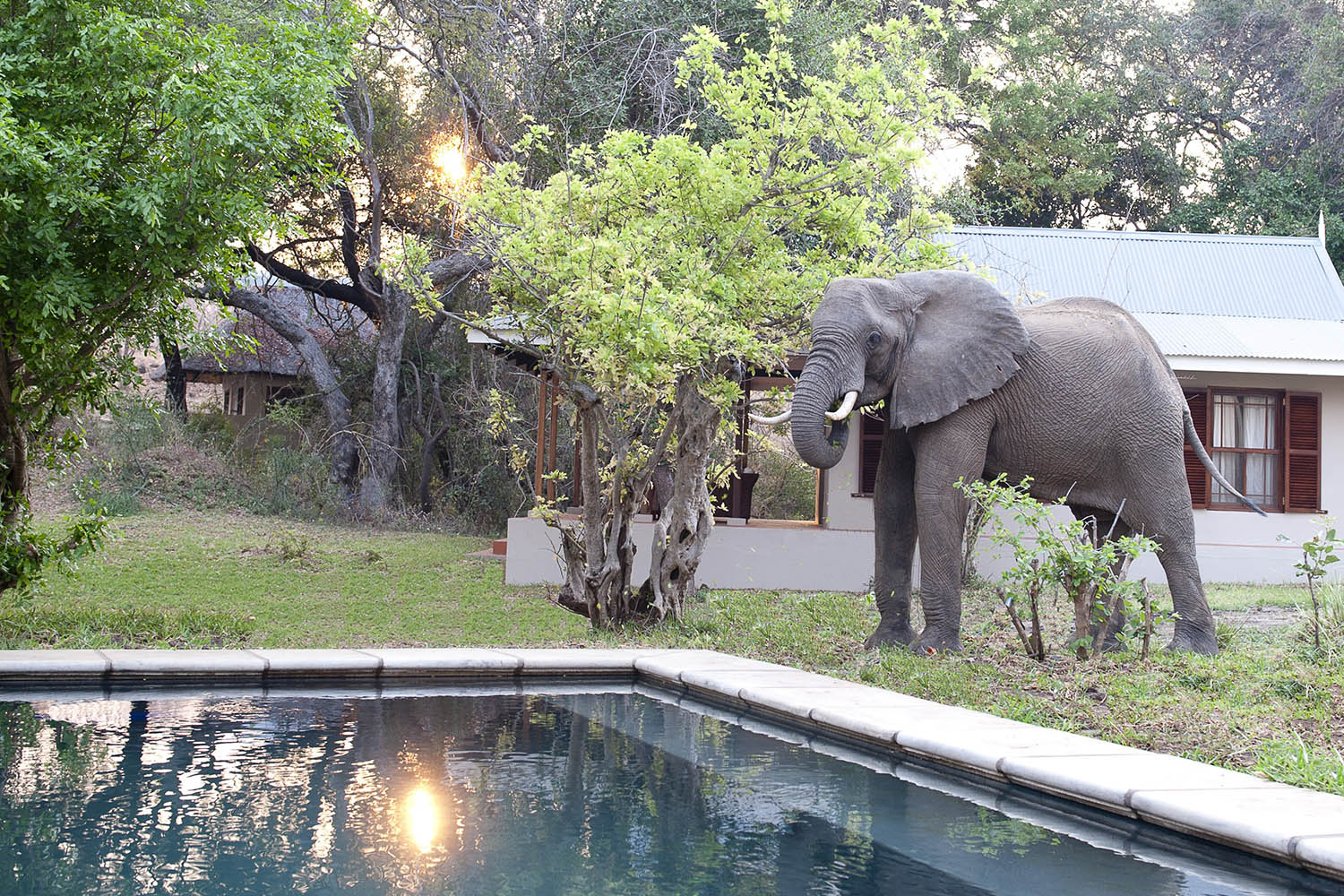 baines river camp zambia-in-style-safari-packages-lodges-lower-zambezi-spectacular-scenery-elephant-swimming-pool