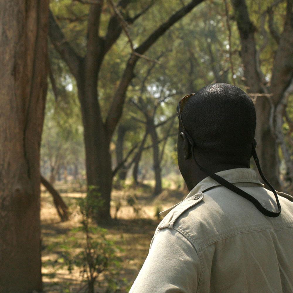 baines river camp zambia-in-style-safari-packages-lodges-lower-zambezi-staff-elephants-guided-walks