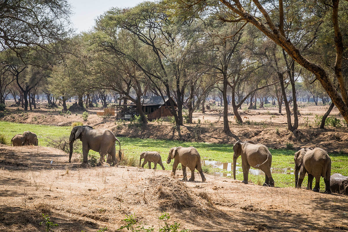 old mondoro camp zambia-in-style-tours-safari-lodges-lower-zambezi-national-park-elephants-walking