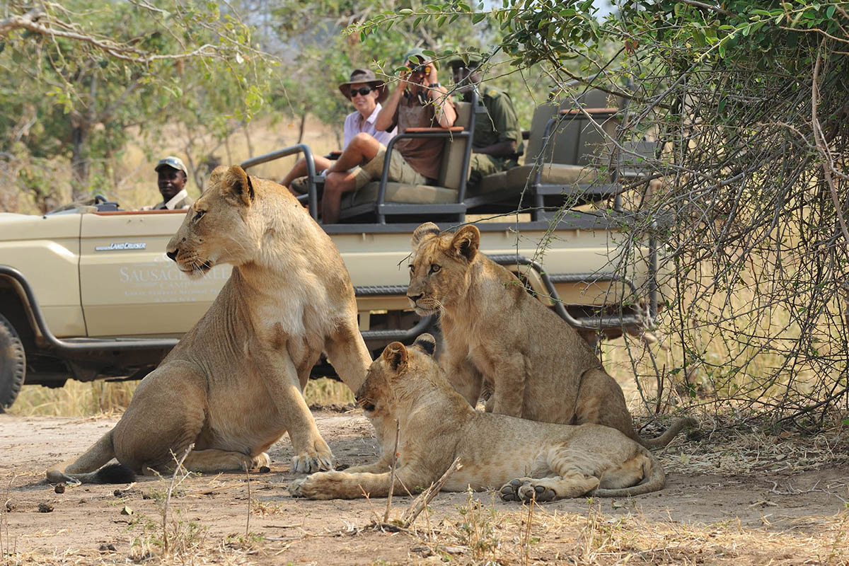 potato bush camp beach-bush-zambia-in-style-safari-packages-game-drive-lions