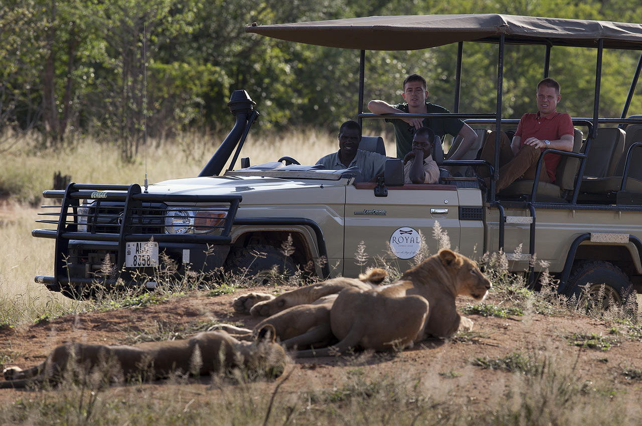 the royal zambezi zambia-in-style-safari-packages-lodges-lower-zambezi-adventure-game-drive-lions