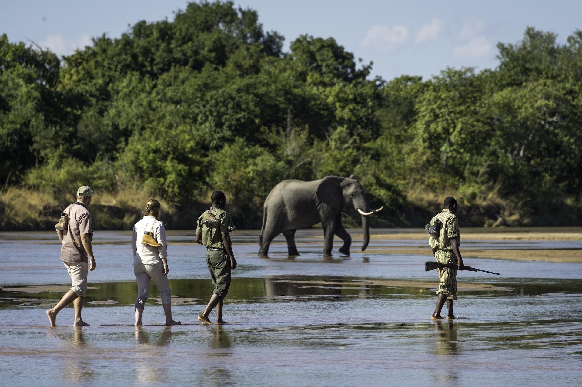 walking safari bushcamp company