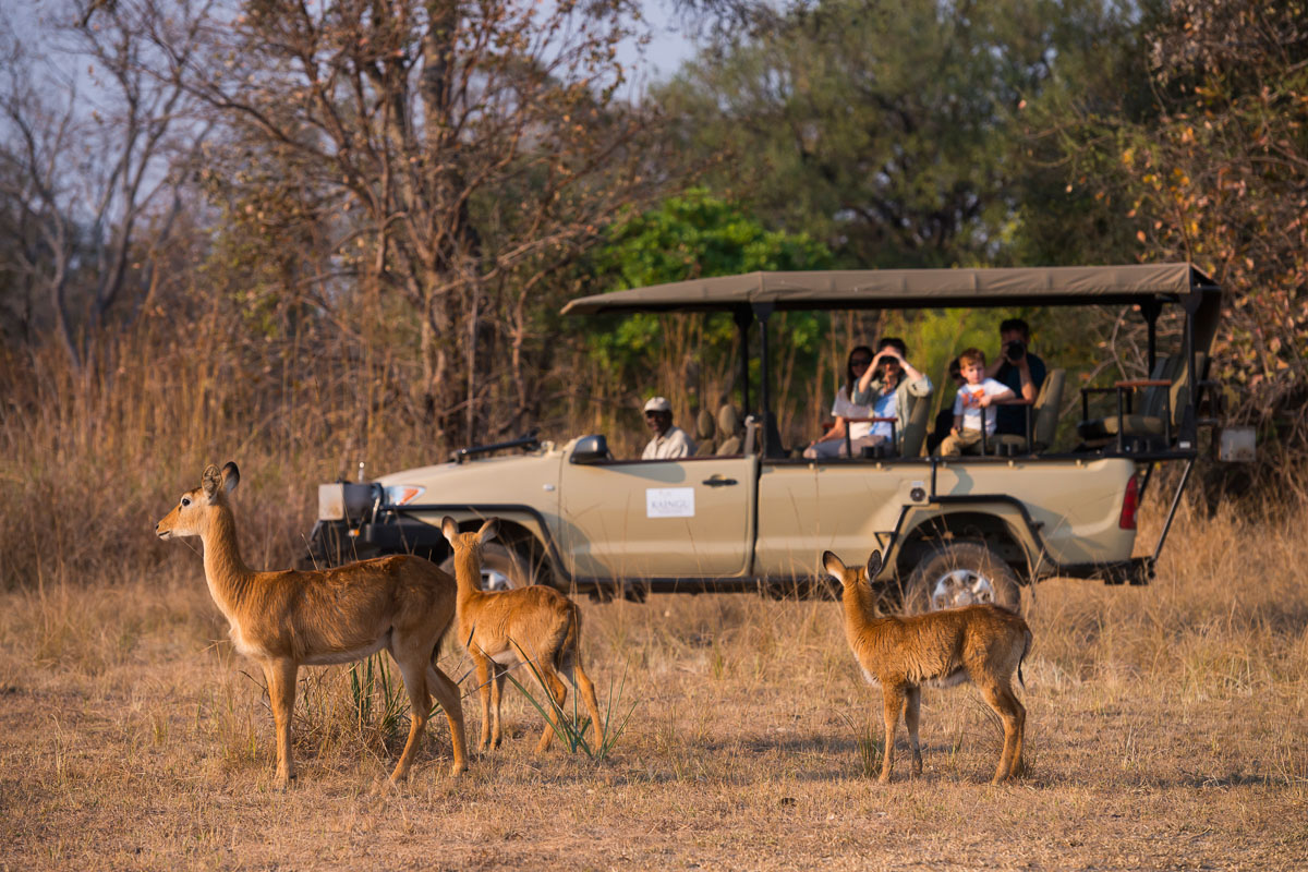 kaingu safari lodge zambia-in-style-safari-packages-lodges-explore-kafue-national-park-game-drive-guides