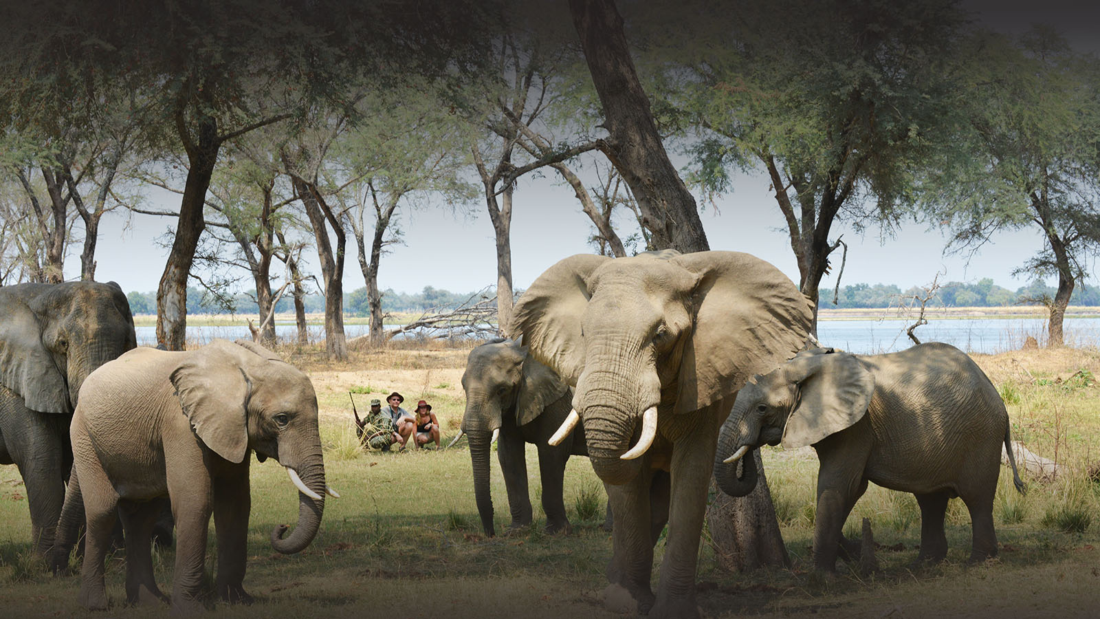 sausage tree camp lodge-zambia-in-style-safari-packages-lodges-lower-zambezi-national-park-guided-walking-safari-elephants