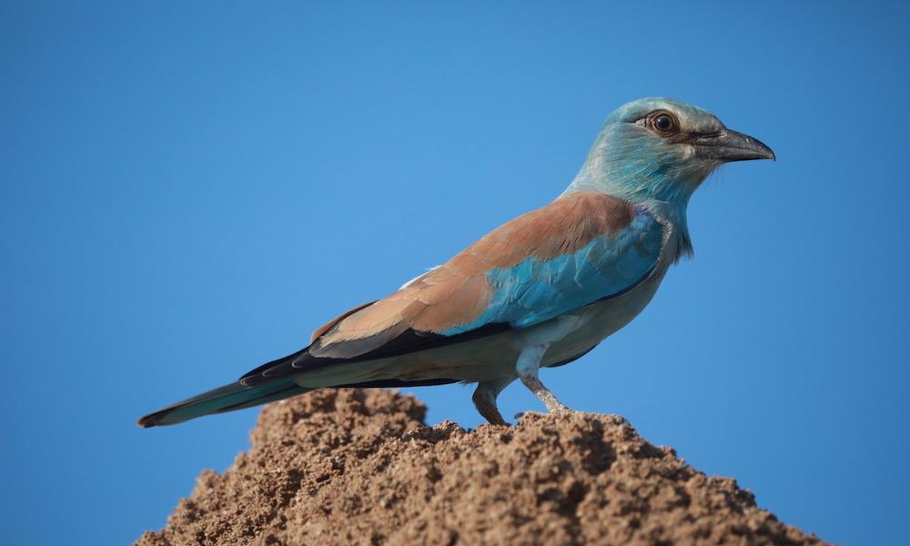 Blue Bird Zimbabwe