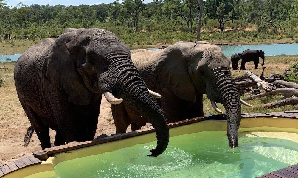 Elephants Watering Hole Zimbabwe