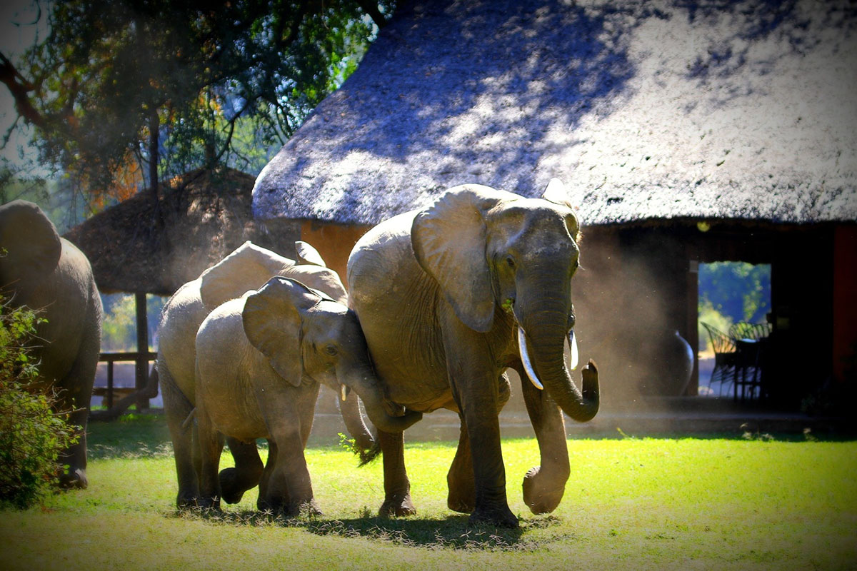 croc valley camp-zambia-in-style-tours-safari-lodges-south-luangwa-mfuwe-camp-elephants