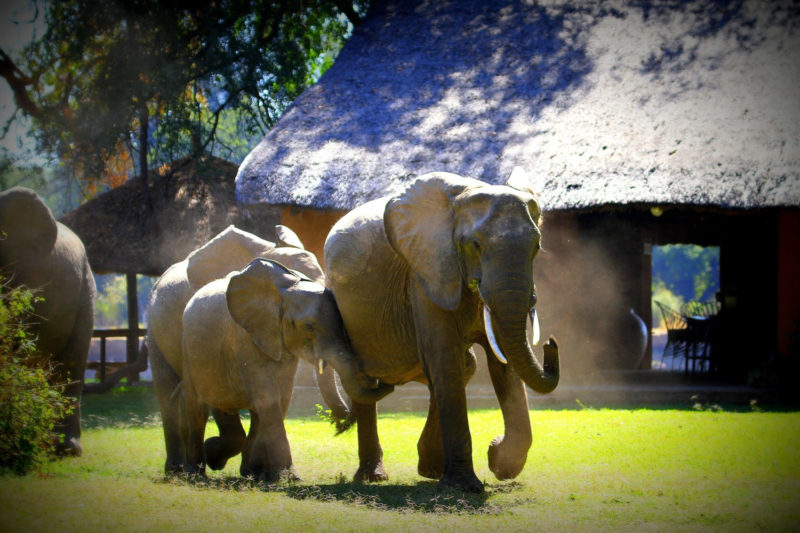 croc valley camp-zambia-in-style-tours-safari-lodges-south-luangwa-mfuwe-wildlife-elephants-camp