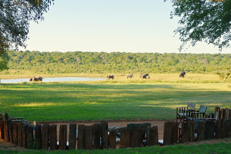 ivory lodge zimbabwe-lodges-zambia-in-style-safaris-wildlife-africa-hwange-national-the-amalinda-collection-elephants-views