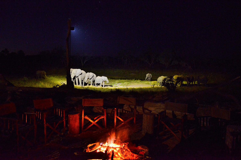 khulu bush camp zimbabwe-lodges-zambia-in-style-safaris-wildlife-africa-hwange-national-park-elephants