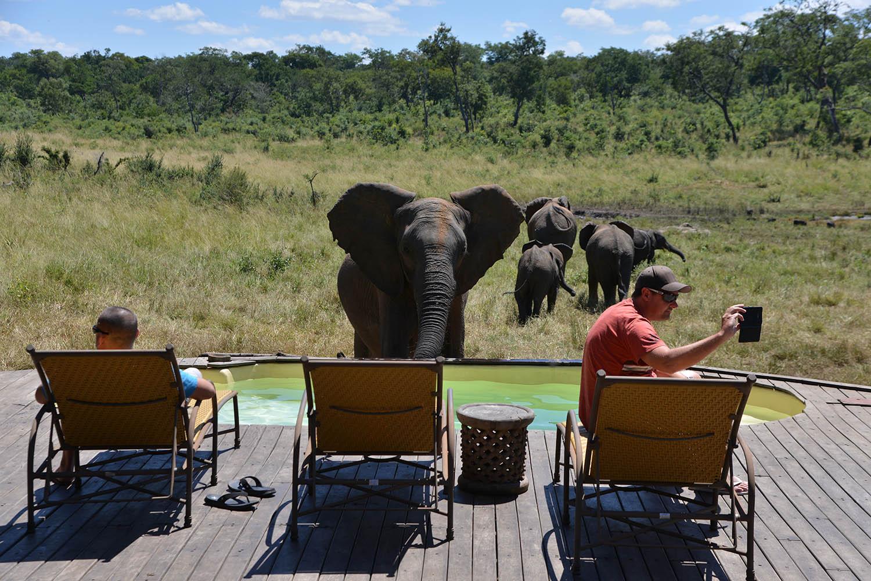khulu bush camp zimbabwe-lodges-zambia-in-style-safaris-wildlife-africa-hwange-national-park-elephants-deck