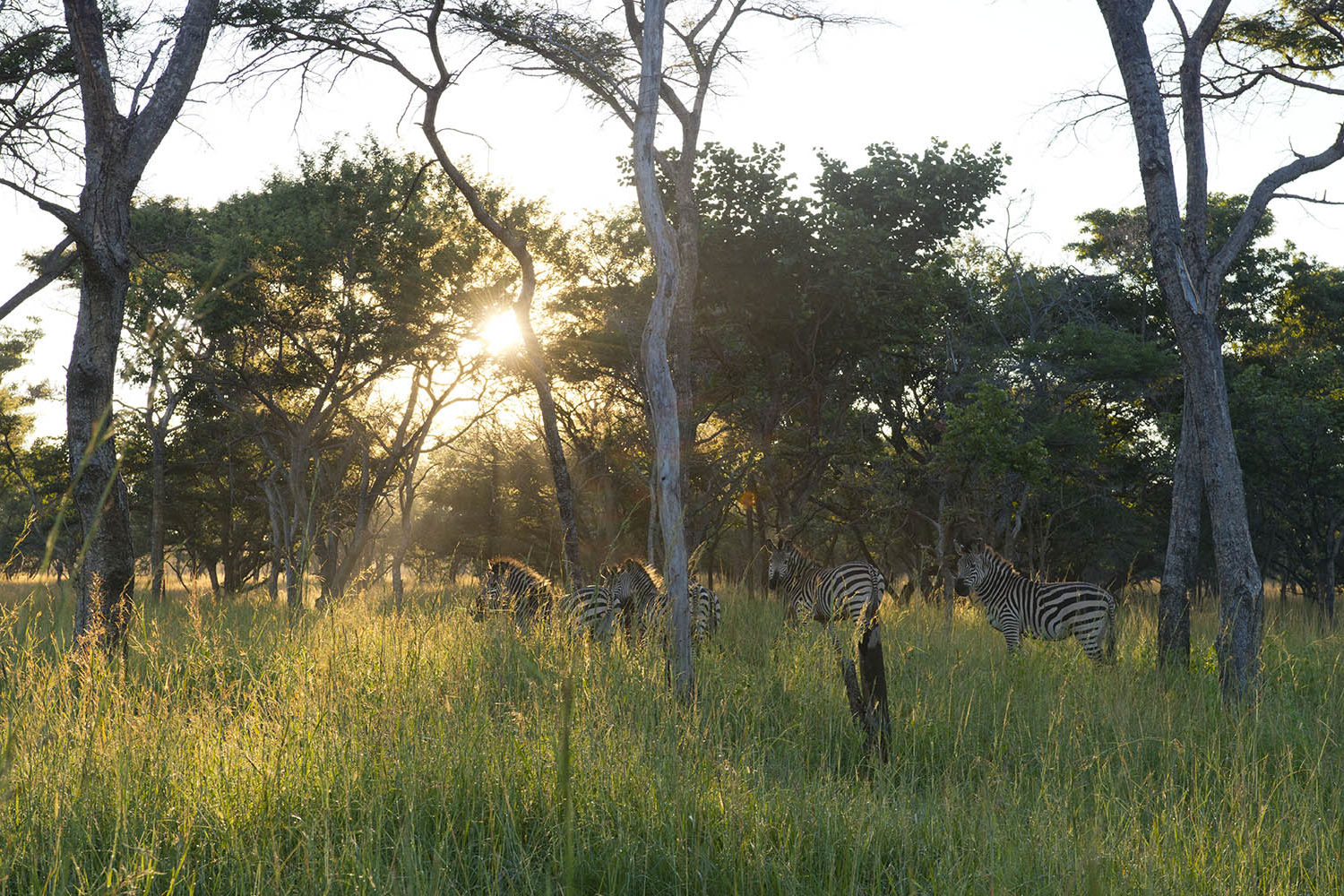 lilayi lodge zambia-in-style-tours-safari-packages-lodges-lusaka-accommodation-activities-zebras