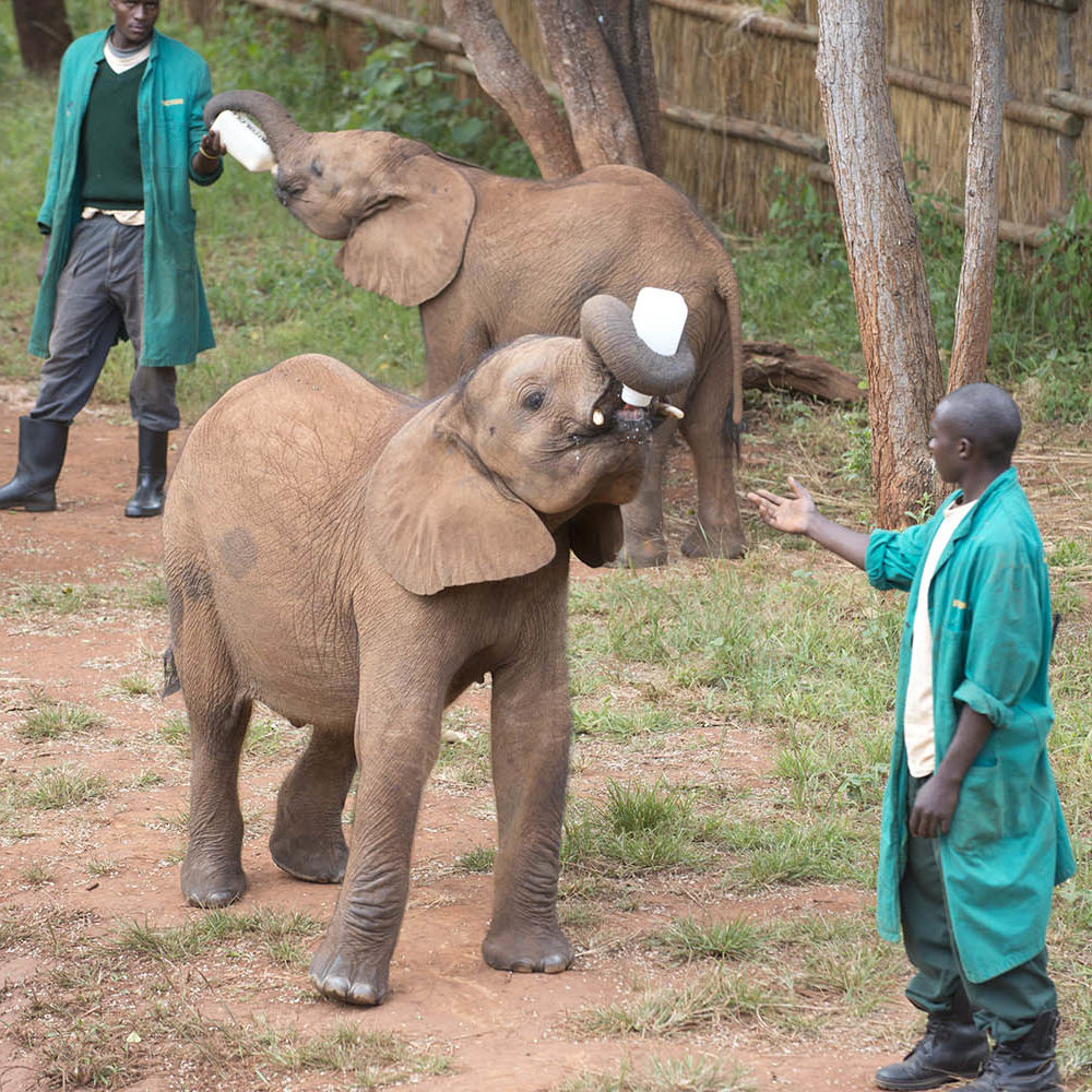 lilayi lodge zambia-in-style-tours-safari-packages-lodges-lusaka-accommodation-elephant-nursery-baby-elephant-fed