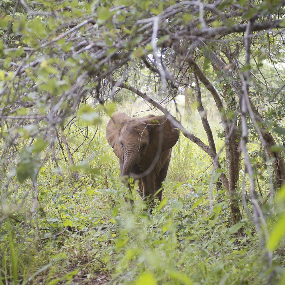 lilayi lodge zambia-in-style-tours-safari-packages-lodges-lusaka-accommodation-elephant-nursery-elephant-walking