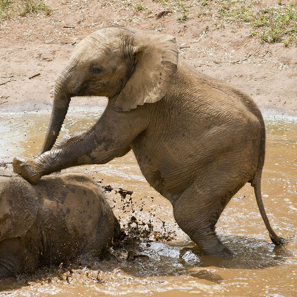 lilayi lodge zambia-in-style-tours-safari-packages-lodges-lusaka-accommodation-elephant-nursery-elephants-playing-mud