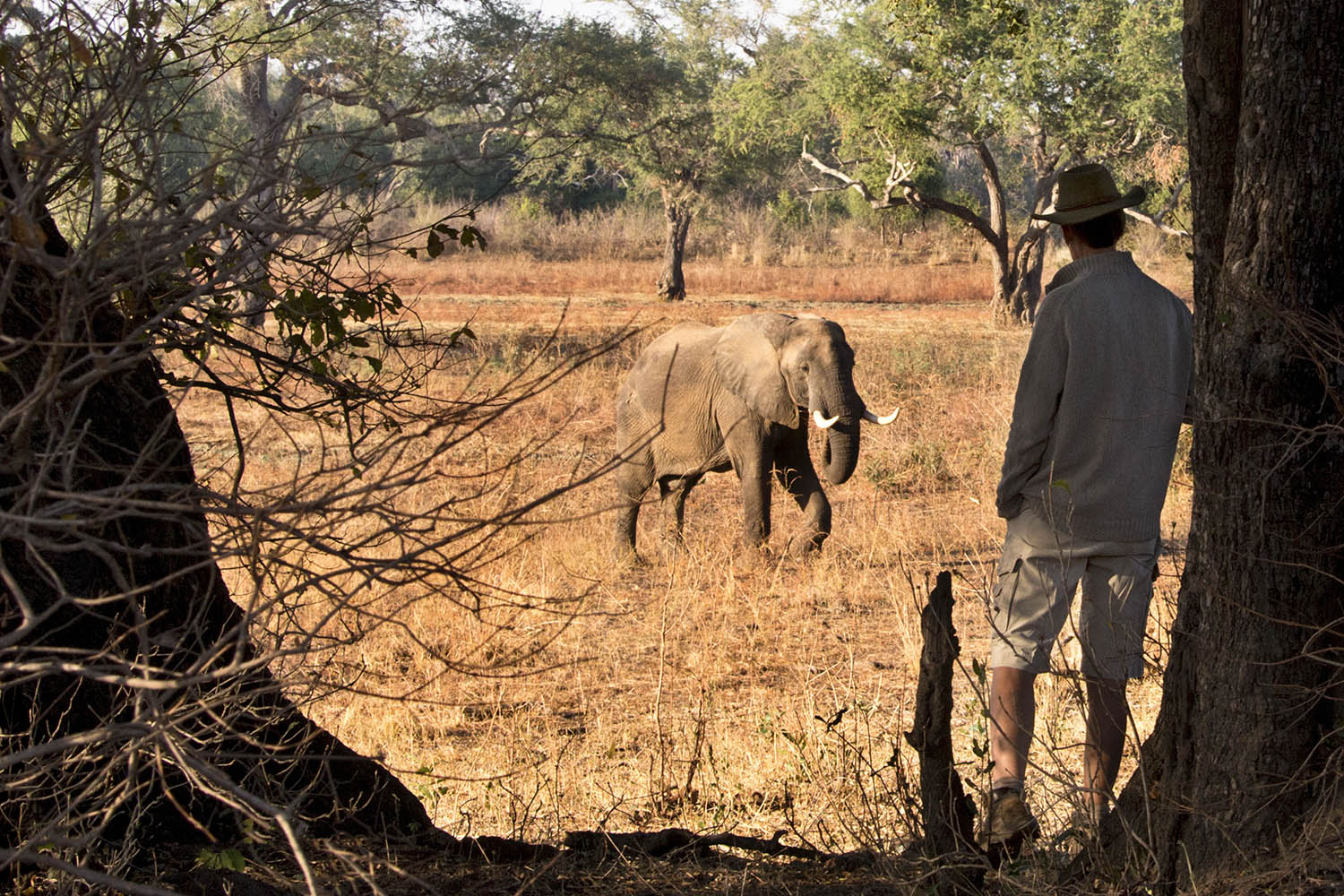 mapazi-lodge-zambia-in-style-tours-safari-lodges-south-luangwa-remote-walks-Deb-with-elephant