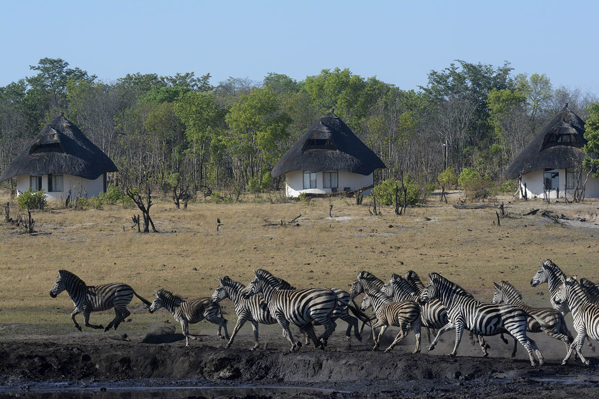 sable sands zimbabwe-lodge-zambia-in-style-tours-safari-packages-safaris-wildlife-africa-vlei-rooms-zebra
