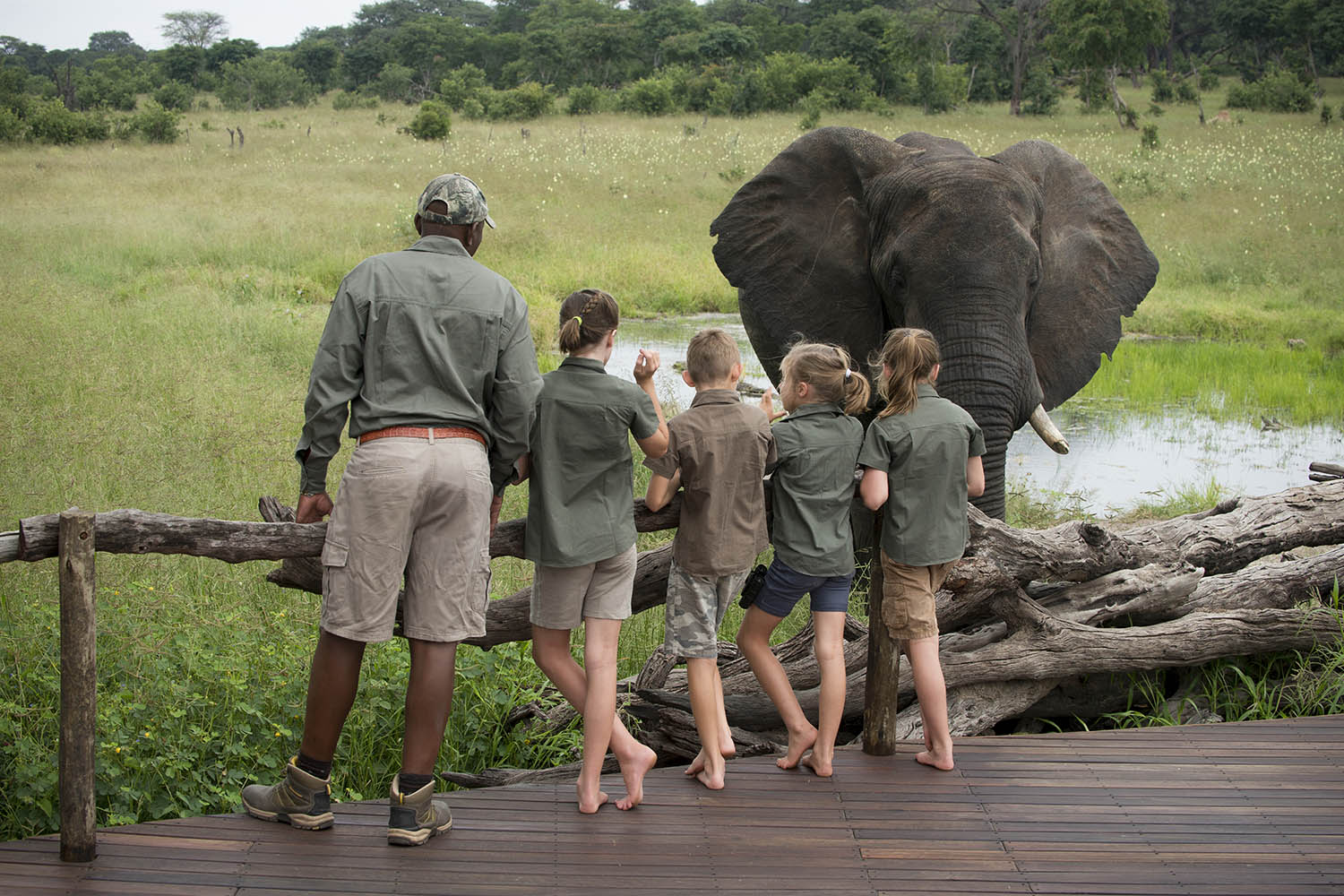 somalisa acacia zimbabwe-lodges-zambia-in-style-safaris-wildlife-africa-hwange-national-park-friendly-staff-guide-elephant-deck