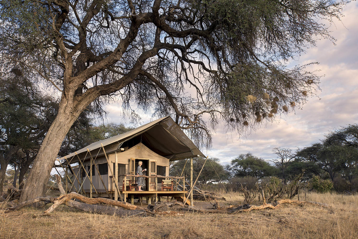 somalisa expeditions zimbabwe-zambia-in-style-hwange-national-park-african-bush-camps-traditional-safari-experience-bedroom-from-outside